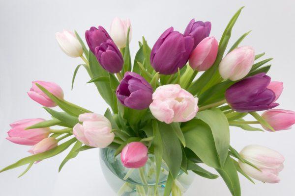 Ajioki - préservez longtemps la fraicheur de vos fleurs